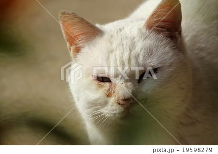 眉間にシワを寄せる猫 19598279