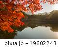 浮御堂 紅葉 水鏡の写真 19602243
