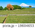 【静岡県】富士山と茶畑 19604653