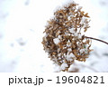 Flower In Winter With Ice Crystals 19604821