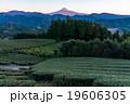 【静岡県】早朝・富士山と茶畑 19606305