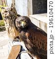 隅田川のミミズクと鷹 19610470