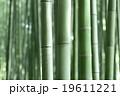 竹林 竹 緑の写真 19611221
