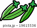 オクラ 19615536