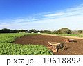 秋晴れの畑 19618892