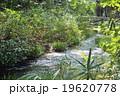 糺の森 京都 下鴨神社 19620778