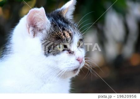 新潟県山の下海浜公園の野良猫 19620956