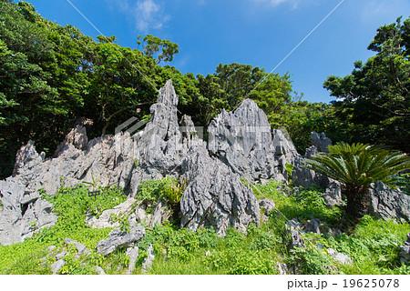 沖縄県 大石林山 19625078