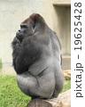 シャバーニ 東山動物園 19625428