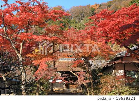 鎌倉・円覚寺の紅葉 19639221