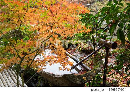 毘沙門堂庭園・晩翠園、苔むした手水鉢に雨の紅葉 19647404