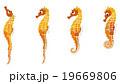 海の生き物 タツノオトシゴ 19669806