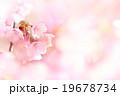 桜 19678734