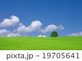 野原 運動場 畑の写真 19705641
