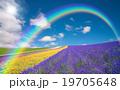 花 ブルー 青の写真 19705648