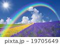 花 ブルー 青の写真 19705649