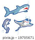 サメ イルカ マンタ 19705671