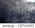 北海道 阿寒  鶴居村 樹氷 19714302