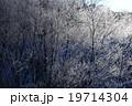 北海道 阿寒  鶴居村 樹氷 19714304