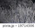 北海道 阿寒  鶴居村 樹氷 19714306