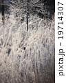 北海道 阿寒  鶴居村 樹氷 19714307