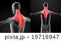 立体 3D 3Dのイラスト 19716947