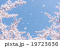 桜吹雪 19723636