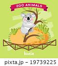 動物園 コアラ ベクタのイラスト 19739225