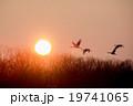 鶴と朝日 19741065