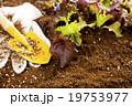 庭 テブクロ 手袋の写真 19753977