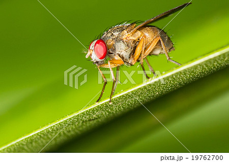Closeup of a fly on a green leaf