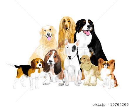 犬たち 19764266
