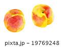 杏 果物 杏子のイラスト 19769248