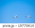 青空に2羽 19770610