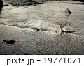 鶯野 玉川 風景の写真 19771071