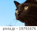 空と黒猫 19791676