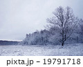 winter season tree on the edge of the forest  19791718