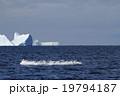 北極の氷山とアジサシ 19794187