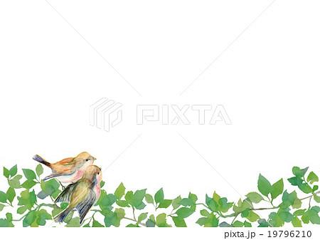イラスト 新緑 小鳥 19796210