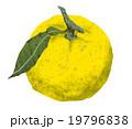 果実 柚子 フルーツのイラスト 19796838
