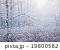 winter forest - beautiful scene with day light 19800562