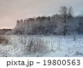 winter evening landscape with tree and snow 19800563
