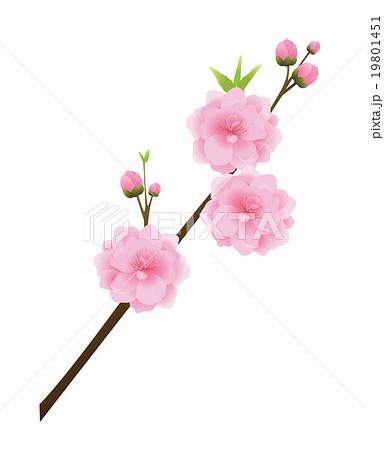 桃の花のイラスト素材 19801451 Pixta