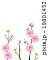 桃の花 19801452