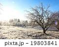Winter landscape with hoarfrost crystal apple tree 19803841