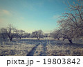 Road in the winter forest landscape 19803842
