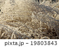 Grass with ice crystals 19803843