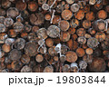 A pile of wood tree logs 19803844