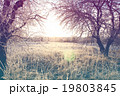 Beautiful winter landscape 19803845