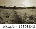 Path in cold winter field. Sepia effect landscape 19803848